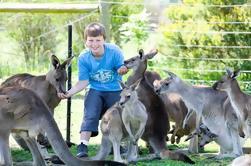 Boleto de Entrada General de Maru Koala y Animal Park