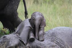 Día Tour: Giraffe Center, Elefante Orfanato y Parque Nacional de Nairobi