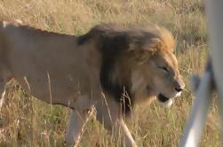 Safari guiado de Masai Mara de 3 días desde Nairobi