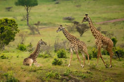 Excursión guiada de Arusha National Park desde Arusha