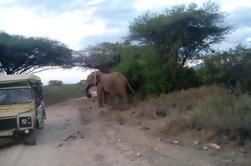 12 días Kenia y Tanzania Safari desde Nairobi