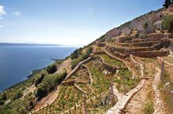 Visita privada: los viñedos de Peljesac y las granjas de ostras de Dubrovnik