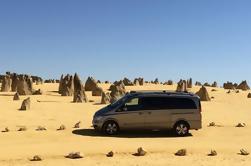 Excursión de un día a Pinnacles y Yanchep desde Perth