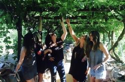 Alcantara Estate Vineyards Tour Incluye degustación de vinos y almuerzo
