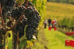 Excursão dos amantes do vinho de Brunello e de Nobile: Montalcino e Montepulciano