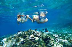 Molokini y Tortuga Arcos Viaje de buceo