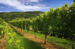 Weekdag Virginia Private Custom Wine Tour van Charlottesville
