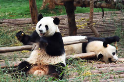 Private Day Tour with Panda Holding at Dujiangyan Panda Base and Wuhou Temple