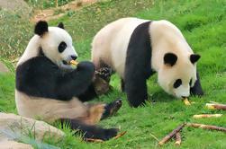 Private Chengdu Impression Day Tour including Chengdu Panda Base