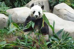 Excursión privada: Chengdu Panda Breeding Base y Sanxingdui Museum