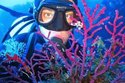 Buceo en el Mar Cíclope desde Acitrezza