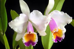 Excursión privada de las orquídeas y cascadas de Tequendama
