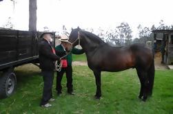 Excursión privada a caballo incluyendo almuerzo