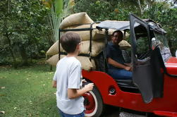 Tour de plantación de café privado con almuerzo