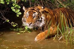 Tour Privado de Triunfo de Oro de 8 Días con un Safari de Vida Silvestre de Ranthambore Desde Delhi