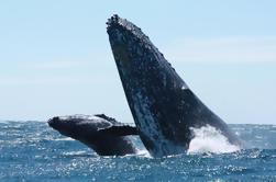 Tour de observación de ballenas en Cabo San Lucas