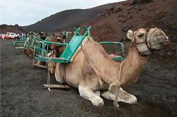 Camel Ride en las dunas de Maspalomas