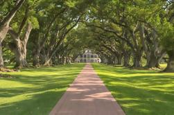 Oak Alley Plantation Tour con transporte privado