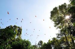 Excursión en grupo pequeño a Can Gio Vam Sat Mangrove Forest