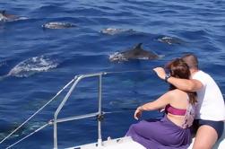 Amazing Land y Sea Pack Jeep Adventure con observación de delfines