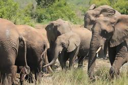 Excursão de dia guiada de Hluhluwe-Imfolozi Game Reserve a partir de Durban