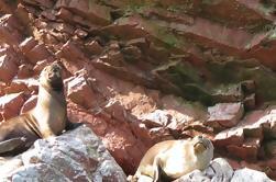 Ballestas Islands Day Trip
