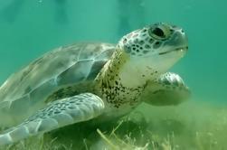 Tortuga Snorkel y Cenote mágico Tour en Tulum