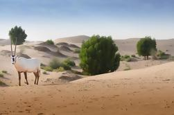 Telal Resort Desert Safari Private Tour With Emirati Dinner from Abu Dhabi