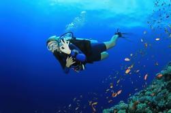 8-Dive Scuba Adventure in Bayahibe