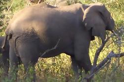 Safari de 3 noches desde Nairobi: Lago Nakuru y Masai Mara