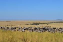 Excursión de 6 noches a la Reserva Nacional de Masai Mara: Parques Nakuru, Amboseli y Tsavo desde Nairobi