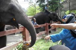 Kuala Gandah Elephant Sanctuary Tour desde Kuala Lumpur