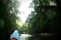 Tour por el Día de la Selva Tropical de Taman Negara