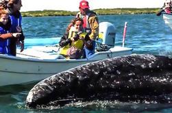 Tour de 2 días: Experiencia de observación íntima de ballenas