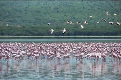 Excursión de un día al Parque Nacional Lago Nakuru desde Nairobi