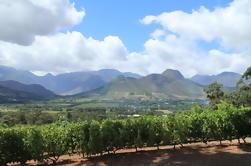 Excursión de 5 días a la costa oeste y vinos de Ciudad del Cabo