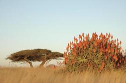 Excursão de 15 dias a KwaZulu-Natal e Garden Route de Durban