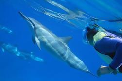 Oahu Snorkel Cruise: nadar con delfines y tortugas en la naturaleza
