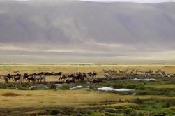 Crucero Ngorongoro de día completo desde Arusha