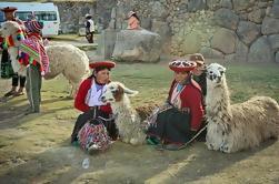 6-Tages-Bestes von Peru