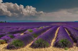 Lavendel Route Guided Day Trip from Avignon