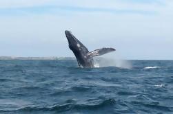 Avistamiento de ballenas en las islas Marietas