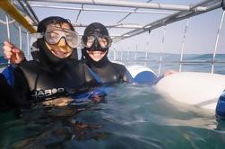 Full-Day Private Great White Shark Cage mergulho e degustação de vinhos experiência de Cape Town