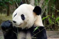 Templo de Pekín Lama, Jardín Panda y Tour del Antiguo Día del Altar