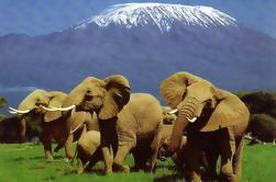 6 Días Amboseli, Lago Nakuru, Masai Mara Wildlife Safaris Todo Incluido