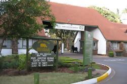 Parque Nacional Nairobi de día completo, orfanato de elefantes, centro de jirafas y visita guiada al Museo Karen Blixen