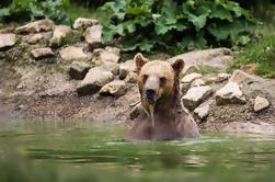 Tour Privado desde Bucarest hasta Zarnesti Bear Sanctuary y el Castillo de Drácula
