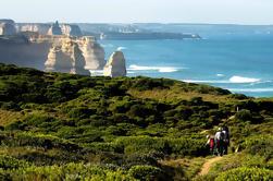 Excursión de un día a Great Ocean Road desde Melbourne con reserva opcional de asientos