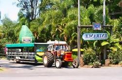 Excursión de un Día Mundial de Frutas Tropicales desde la Costa de Oro Incluyendo Cruceros en Barco de Vida Silvestre y Paseo en Miniatura