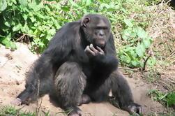 Excursión de Ol Pejeta Conservancy y Chimpanzee Tour Completo de Nairobi